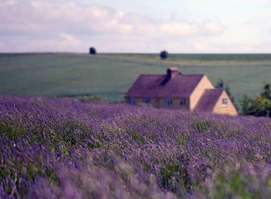 Vidéki hangulat: avagy mi is az a Provence-i stílus?